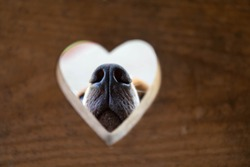 Conceptual portrait. A dog nose through an opening in the form of heart.