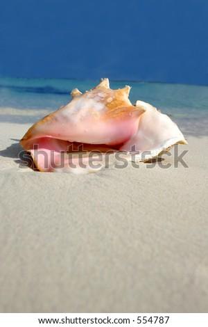 Conch on white sand beach, Riviera Maya, Mexico