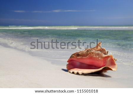 Conch Shell on Calm White Sand Beach