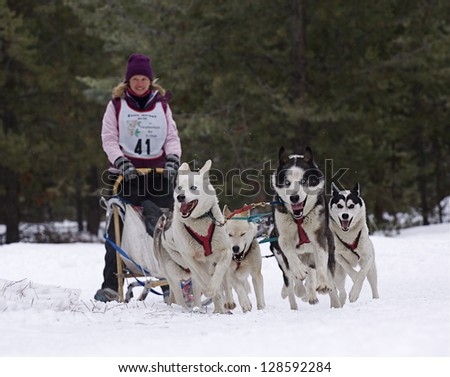 CONCONULLY, WASHINGTON - JANUARY 24:  Driver Mary Jane Davis and Team compete in the Snow Dog Super Mush Dog Sled Race on Jan 24, 2010 in Conconully, Washington