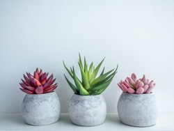 Concrete pots minimal style. Pink, red and green succulent plants in modern round concrete planters on wooden shelf isolated on white background with copy space.