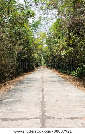Concrete street through the forest into the field,countryside of Thailand.