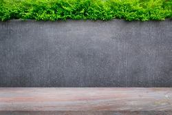Concrete wall or marble wall and marble floor with ornamental plants or ivy or garden tree for background.