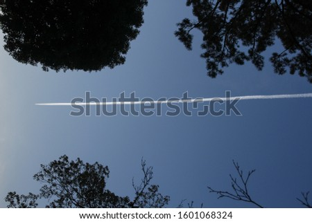 Condensation trails or vapour trails of planes in the sky. white trace on the sky with silhouette trees.