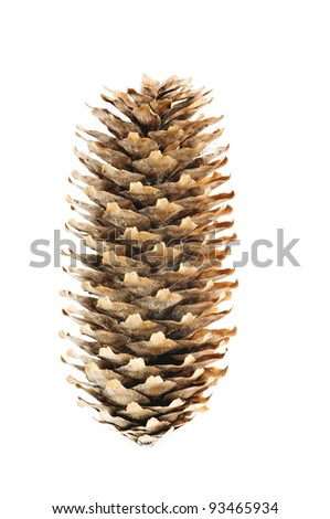 Cone of the fir tree on the white background