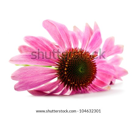 Coneflower  isolated on white