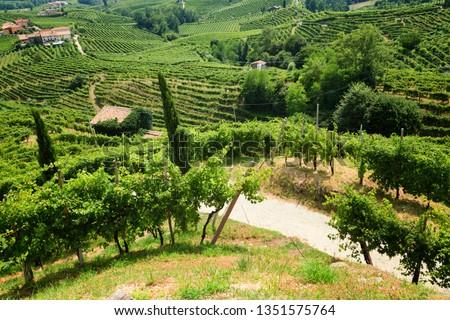 Conegliano Valdobbiadene Region, Italy, - Region in northern Italy famous for its wineries producing original Prosecco Sparkling White Wine  #1351575764