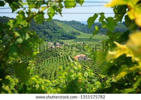 Conegliano Valdobbiadene Region, Italy, - Region in northern Italy famous for its wineries producing original Prosecco Sparkling White Wine  #1351575782