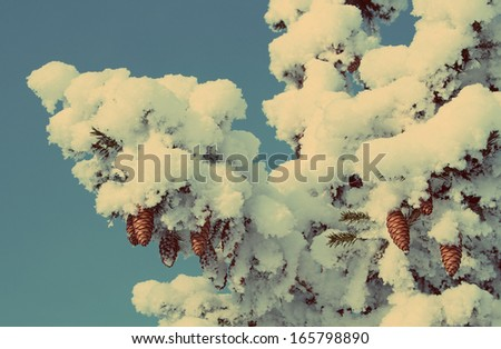 cones on christmas fir branch and blue sky - vintage retro style