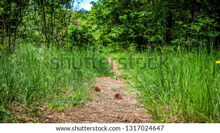 cones on the path in the foreston the path in the forest #1317024647