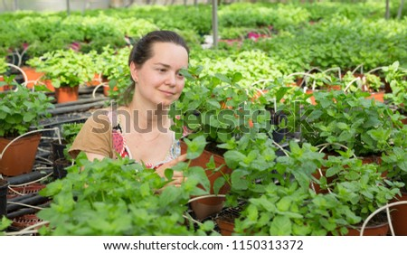 Confident female worker checking mint plants while gardening in glasshouse  #1150313372