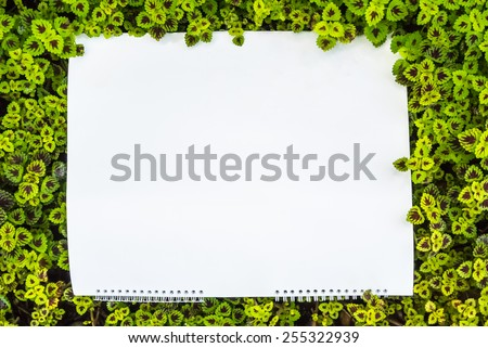 Conflict nature wallpaper pattern and white frame./ Conflict nature wallpaper.