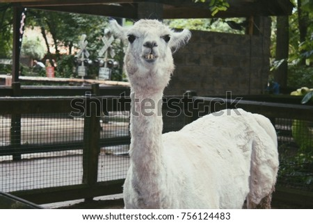 Confused Llama in the Zoo
