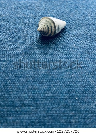 Conical shell on blue