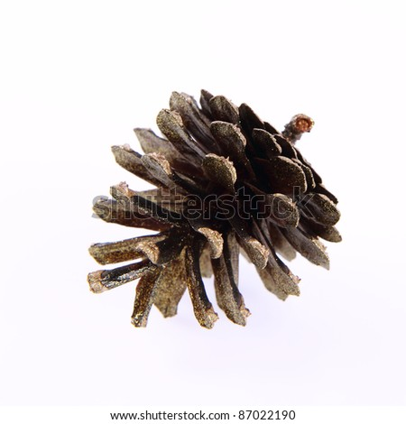 Conifer cone covered with gold glitter