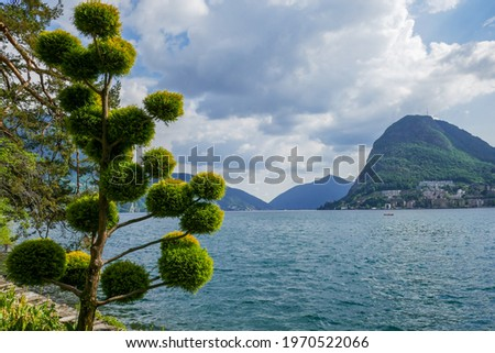 Conifer tree pruned in round shapes in the Ciani Park along Lake Lugano (Ticino, Switzerland), with Monte San Salvatore in the background. Zdjęcia stock ©