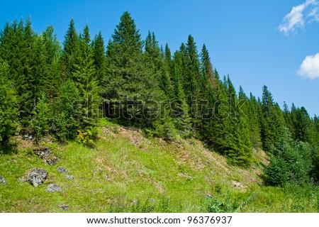 coniferous forest at rocky hill. Perm Krai. Russia. - stock photo
