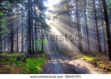 coniferous forest early in the morning - God beams