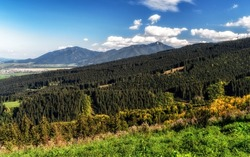 Coniferous forest in Low Tatras mountains. Hill Poludnica and Sina at background. Slovakia