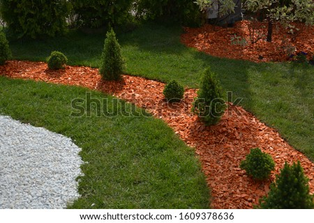Coniferous plants with pine mulch and marble crumbs on the garden lawn. Beautiful landscape design with canadian Conica firs.