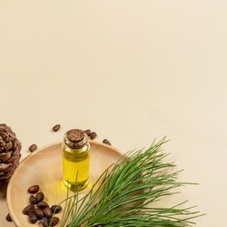 Coniferous spa aromatic essential cedar oil in small glass bottle on wooden plate with cedar branch, cone, nuts on beige backdrop with copy space. Aromatherapy and spa concept. Square photo.