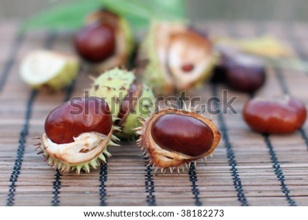 Conker in its shell surrounded by other opened conkers