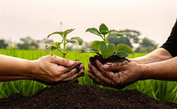 Conservation of world resources, Hand of a man holding a tree to prepare for planting in the ground, Planting trees is adding oxygen to the air, Save world save life concept.