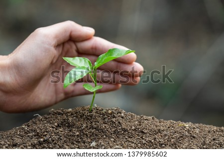 Conserve the environment by planting trees. hand protect  with plant growing. concept finance environment Earth Day In the hands of trees growing seedlings. #1379985602