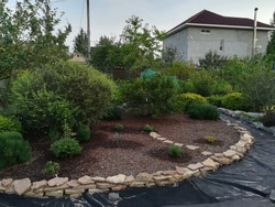 construction of garden bed with coniferous plants,shrubs on mulched bed.Rockery garden with Sandstone.Garden design with arrangement of paths covered with geotextile material on cottage background