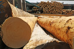 Construction timber in a sawmill