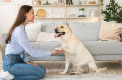 Contact Concept. Portrait of woman teaching her dog a command. Labrador giving paw to his female owner sitting on the floor in living room. Smiling lady playing with her pet friend indoors at home