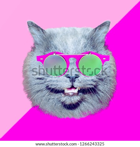 Contemporary art collage.  Cat in stylish vintage sunglasses. Minimal fun art