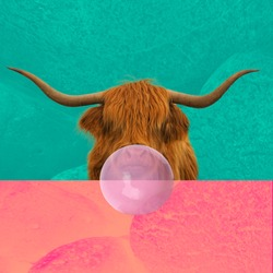 Contemporary art collage. Concept bull chewing bubblegum on a wall colorful background.