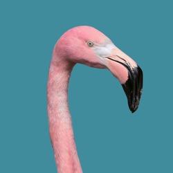 Contemporary art collage, Flamingos Lover