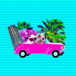 Contemporary art collage.  Funny Cats travel on retro car. Vacation vibes