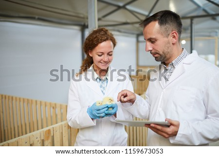 Contemporary vet or engineer with tablet touching one of chicks held by his colleague during research