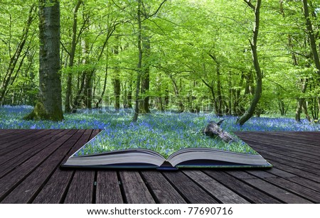 Contents of magical book containing bluebell woods spills over and blends into background