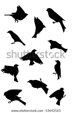 Songbird In Flight Silhouette