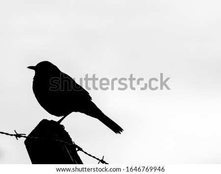 Contrast, bird of Agronomia, City of Buenos Aires, year 2016 Zdjęcia stock ©