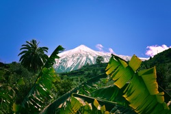 Contrast of El Teide snowed with tropical Palm trees and Banana leaves