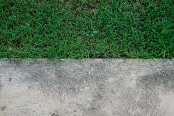 contrast of grass and cement texure