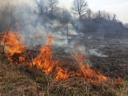 Controlled burning of vegetation in the spring