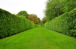 converging hedges in a park