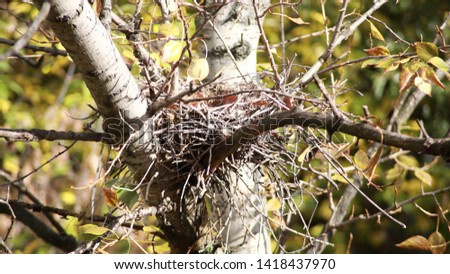 convolute nest on tree at dry day