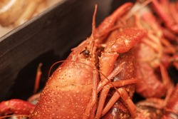 Cooked and seasoned crawfish (crayfish crawdad) close up picture: Ready to be served.