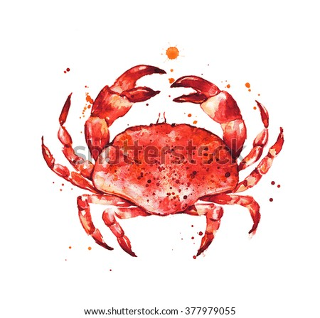 Cooked crab, hand drawn seafood illustration
