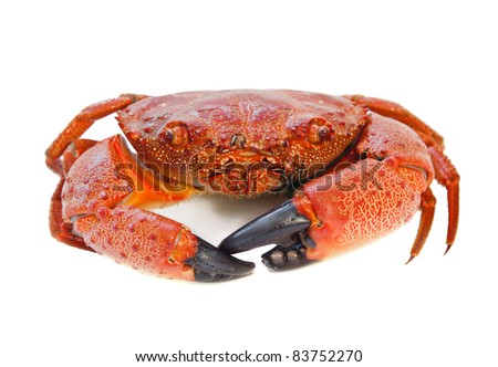 Cooked Crab isolated on white