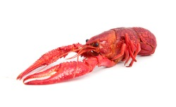 Cooked crayfish in typical red color.
