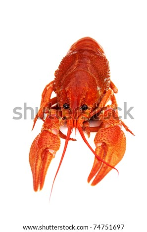 Cooked crayfish isolated on white