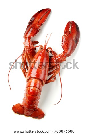 cooked lobster isolated on white #788876680